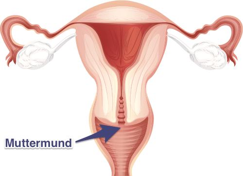 Muttermund beobachten | myNFP